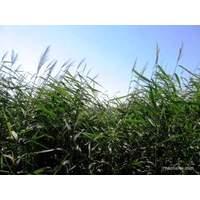 Природные материалы. Плетение из трав.