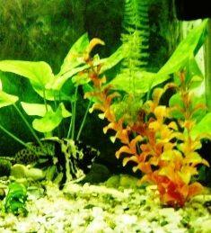 Уход за аквариумом - практические и полезные советы. Подбор и посадка аквариумных растений.
