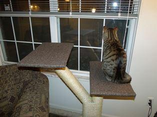 Место для кошки.