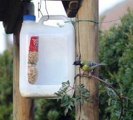 Кормушки для кур из 5 литровой пластиковой бутылки своими руками